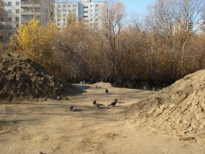 Песок и голуби