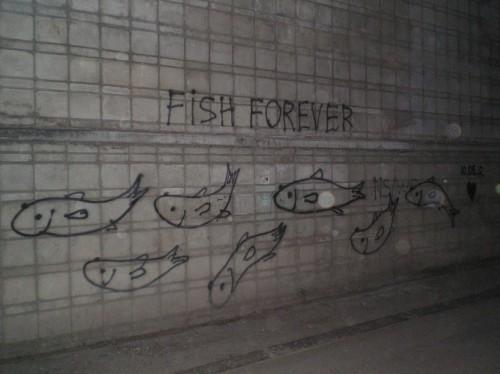 Спасибо за рыбок!