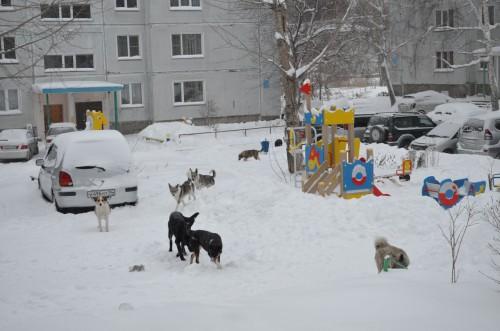 Собаки на
